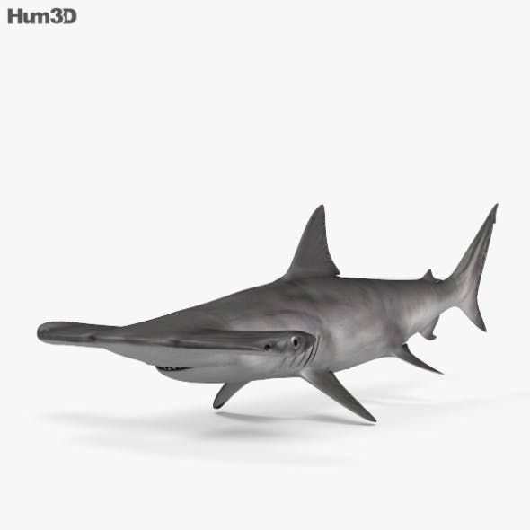 Smooth Hammerhead HD
