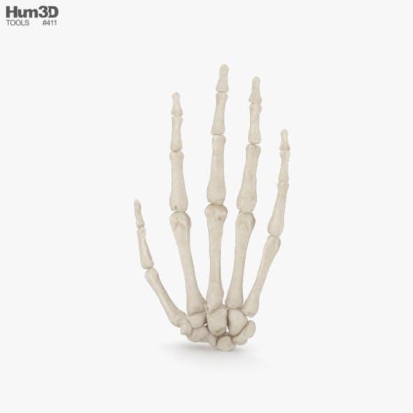 Hand Bones - 3DOcean Item for Sale