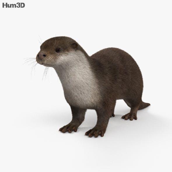 European Otter HD - 3DOcean Item for Sale