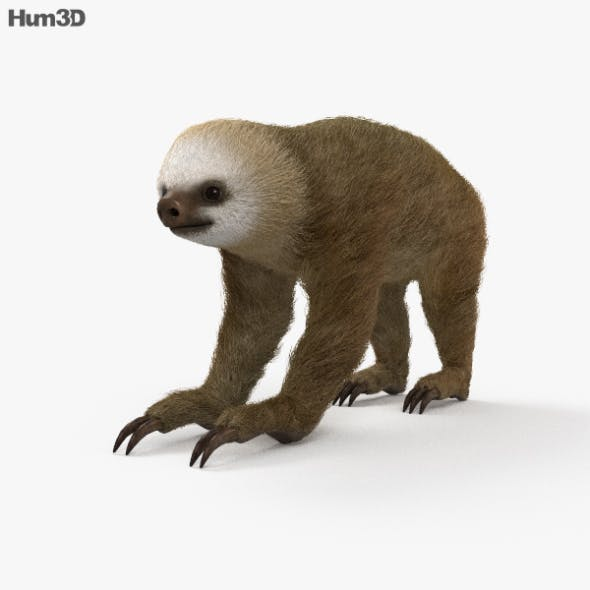 Two-Toed Sloth HD - 3DOcean Item for Sale