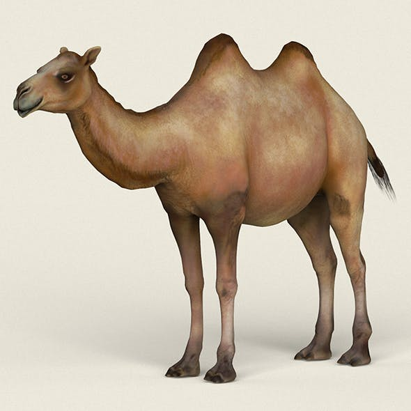 Low poly Realistic Camel
