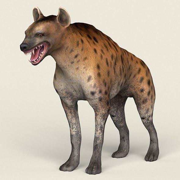 Low poly Realistic Hyena