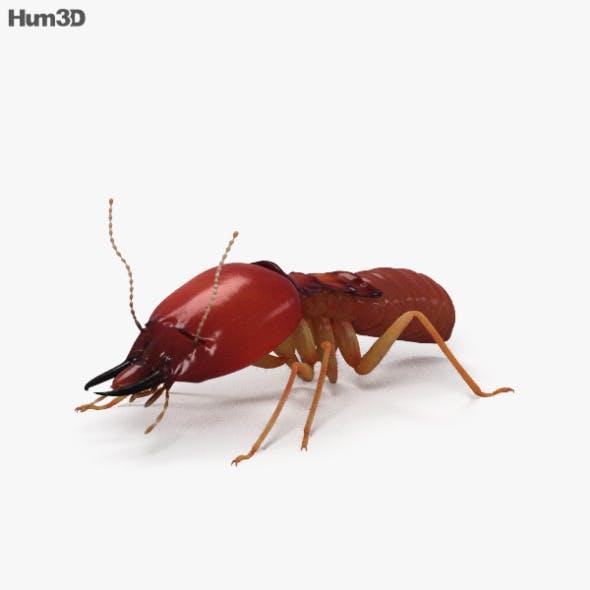 Termite HD - 3DOcean Item for Sale