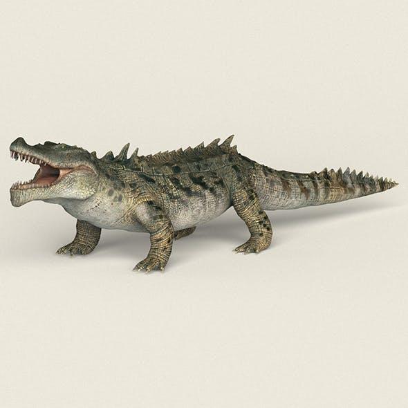 Low poly Realistic Crocodile