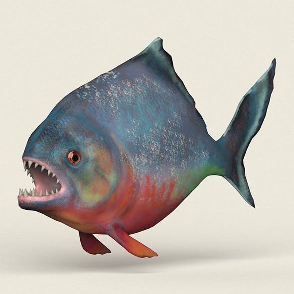 Low poly Realistic Piranha
