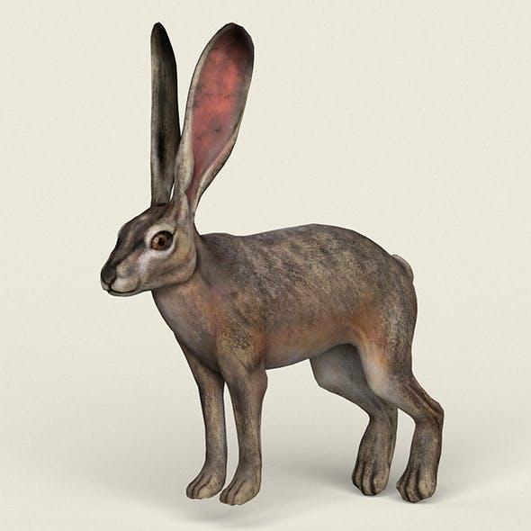 Low poly Realistic Rabbit