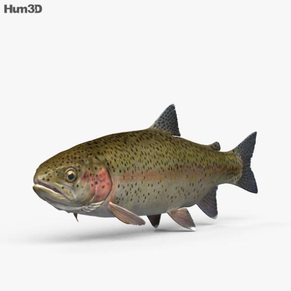 Trout HD