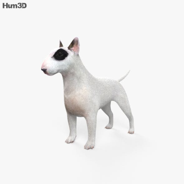 Bull Terrier HD - 3DOcean Item for Sale