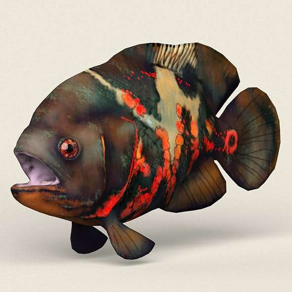 Low poly Realistic Oscar Fish - 3DOcean Item for Sale