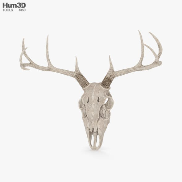 Deer Skull - 3DOcean Item for Sale