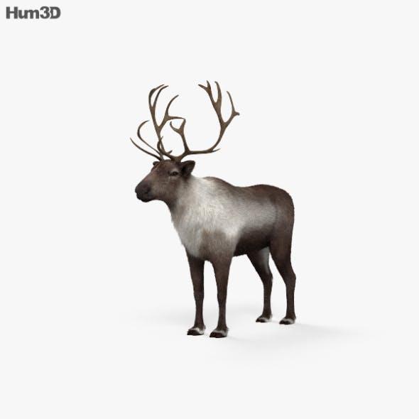 Reindeer HD - 3DOcean Item for Sale