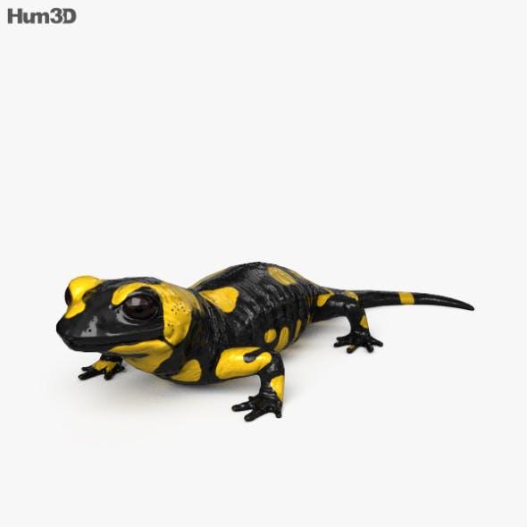 Salamander HD - 3DOcean Item for Sale