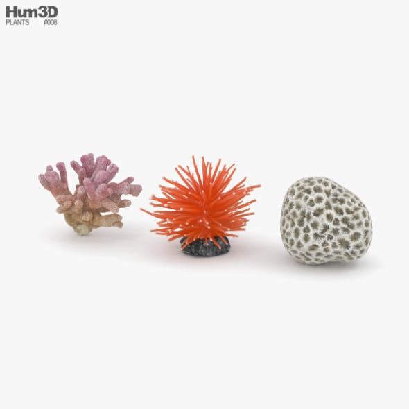 Coral - 3DOcean Item for Sale