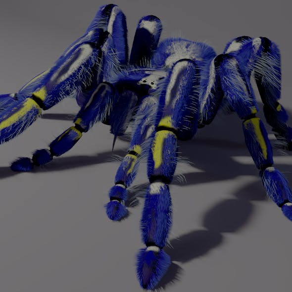 Freaky blue spider - 3DOcean Item for Sale