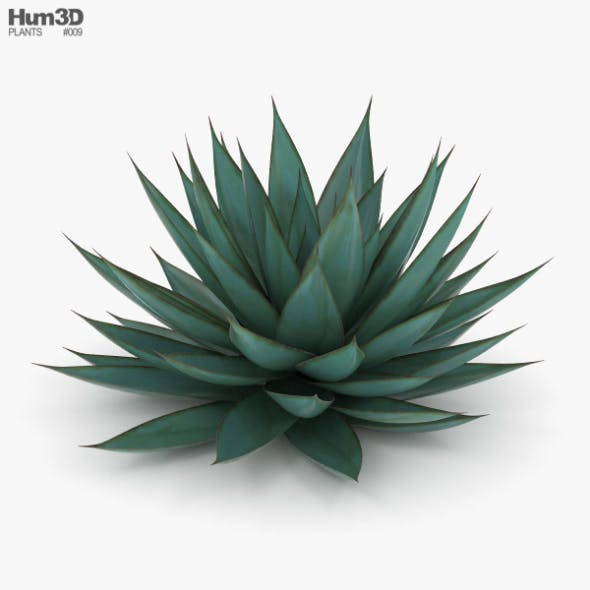 Agave - 3DOcean Item for Sale