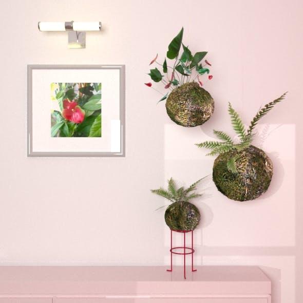 "Plant ""Kokedama"""