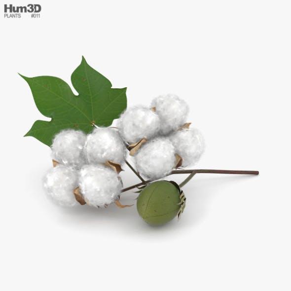Cotton - 3DOcean Item for Sale