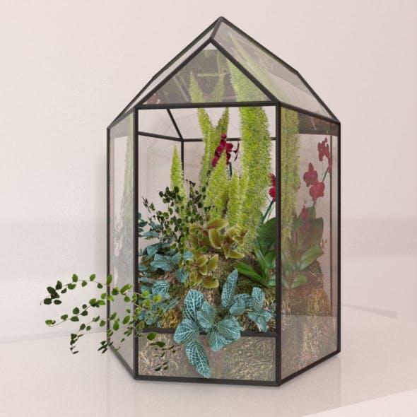 Floriana Plant