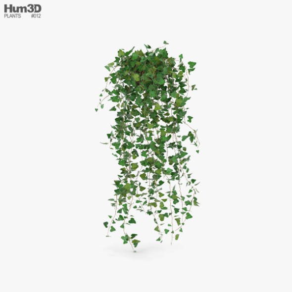 Ivy - 3DOcean Item for Sale