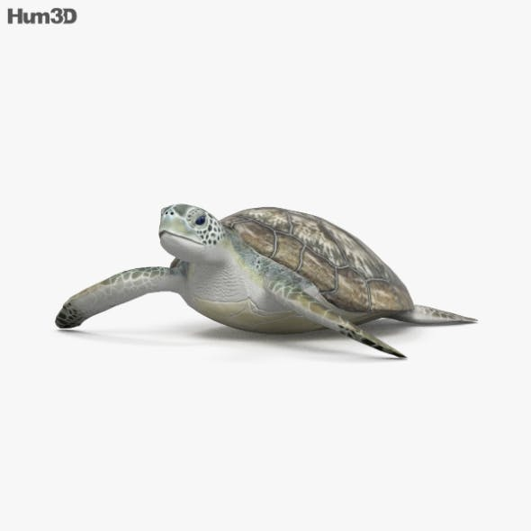Hawksbill Sea Turtle HD