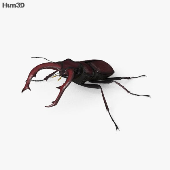 Stag Beetle HD - 3DOcean Item for Sale