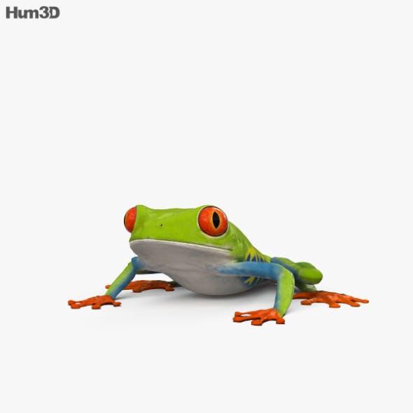 Tree Frog HD - 3DOcean Item for Sale