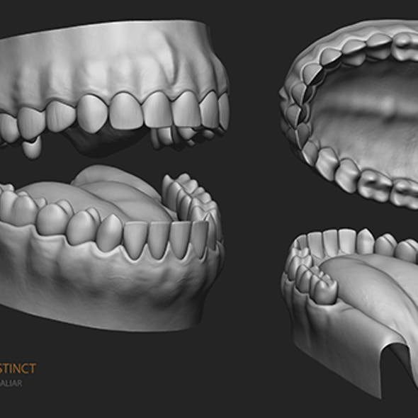Human Teeth,Gums and Tongue - HighPoly