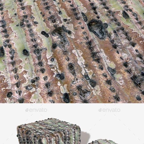 Dead Cactus Seamless Texture