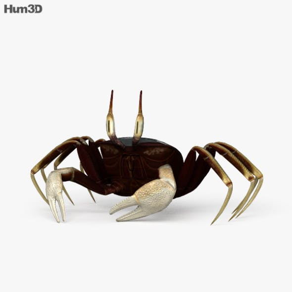 Horned Ghost Crab HD