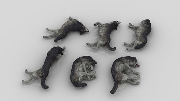 Pack of 6 Dead Wolfs - 3DOcean Item for Sale