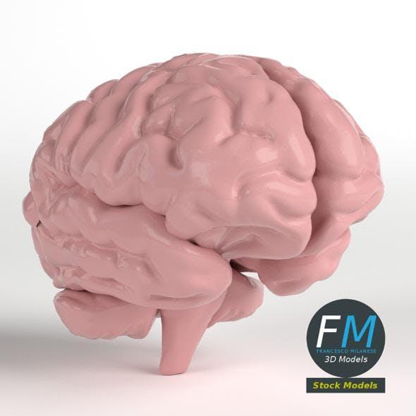 Anatomy - Human Brain - 3DOcean Item for Sale