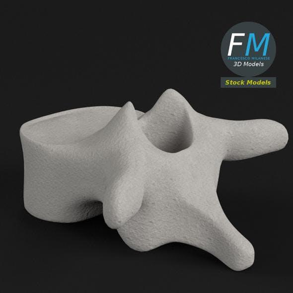 Anatomy - Thoracic Vertebra - 3DOcean Item for Sale