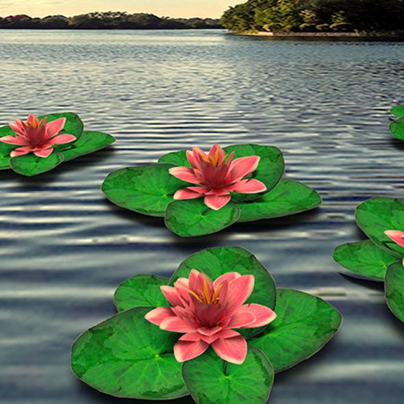 Water Lily Low-poly 3D model
