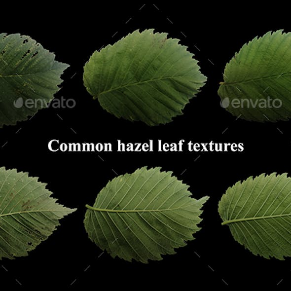 Natural common hezel leaf textures pack of 3 front and back