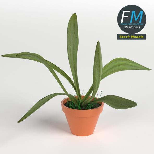 Potted plant 1 - 3DOcean Item for Sale