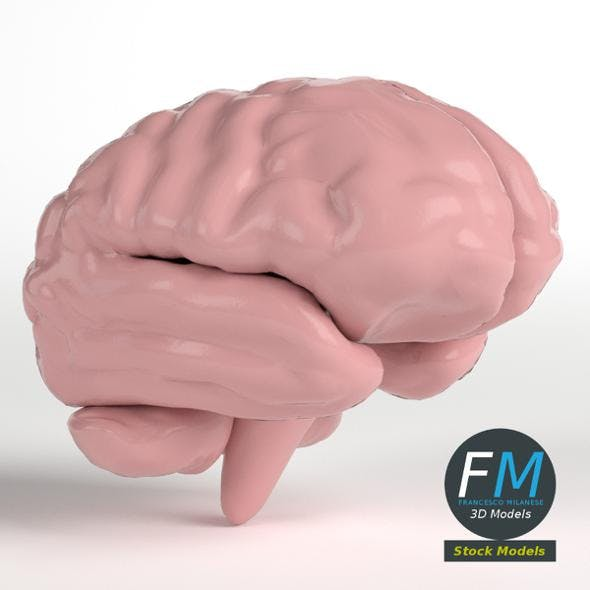 Stylized human brain - 3DOcean Item for Sale
