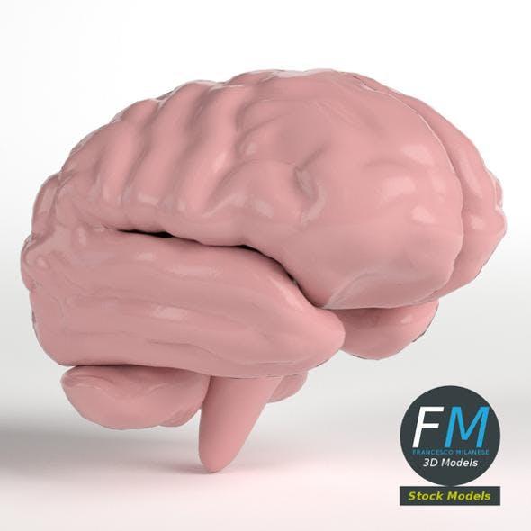 Stylized human brain
