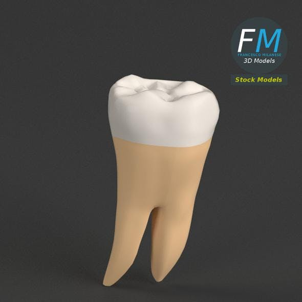 Stylized human first molar tooth - 3DOcean Item for Sale