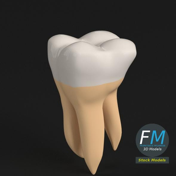 Stylized human second molar tooth