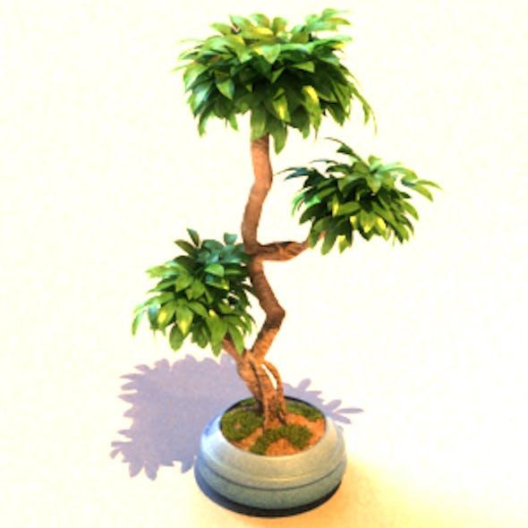 Pot Plants_030