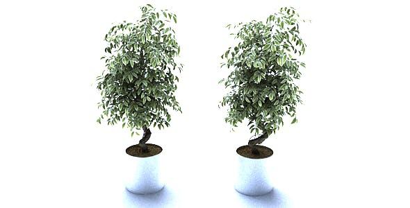 Pot Plants_010 - 3DOcean Item for Sale