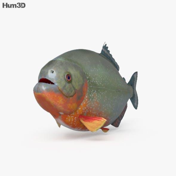 Piranha HD