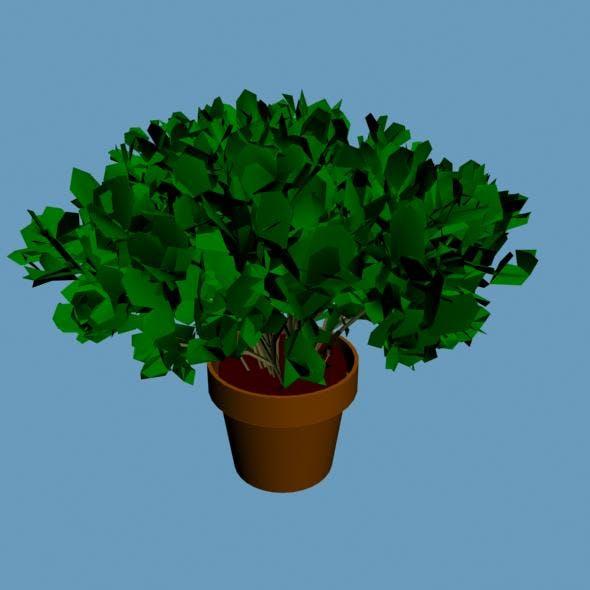 3D Plant - 3DOcean Item for Sale