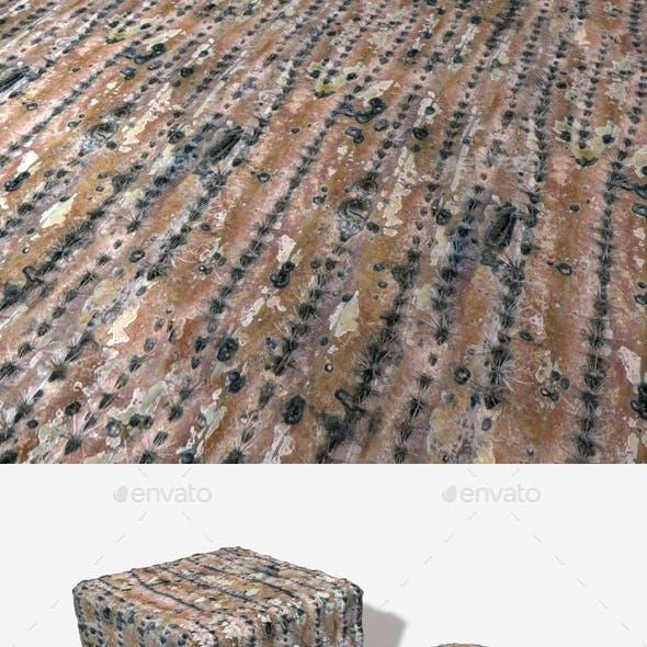 Dry Cactus Seamless Texture
