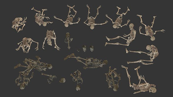 Collection of Human Skeletons and Bones - 3DOcean Item for Sale