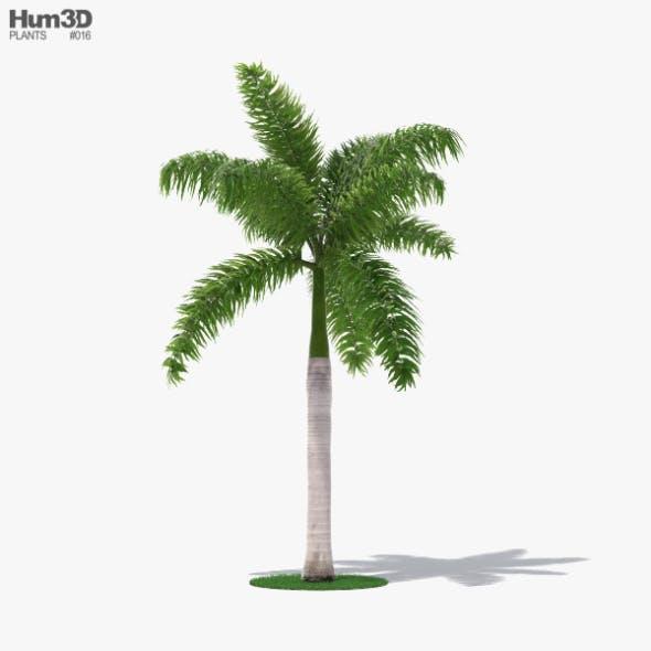 Palm Royal - 3DOcean Item for Sale