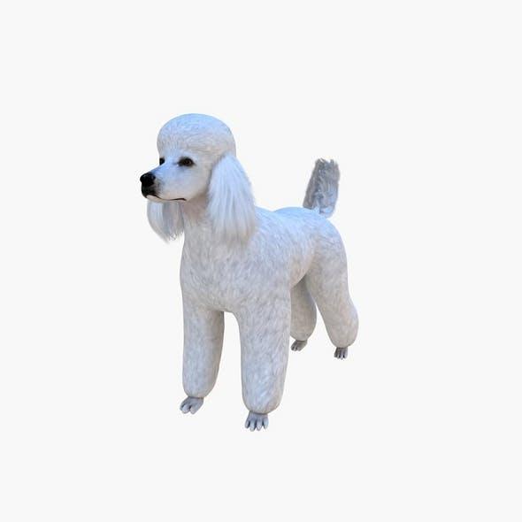 Poodle Big Dog - 3DOcean Item for Sale