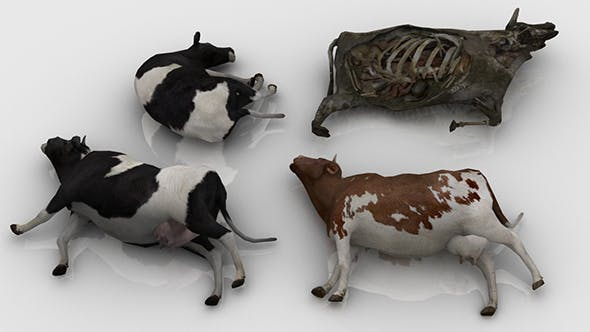 Pack of Dead Cows - 3DOcean Item for Sale