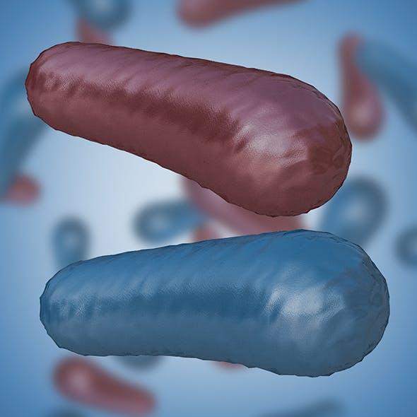 Bacterium 3