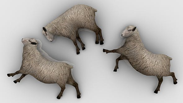 Pack of 3 Dead Sheep - 3DOcean Item for Sale